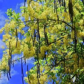 Yellow Shower Tree by Craig Wood