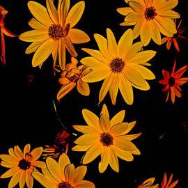 Portrait of  Sunflowers Beauty by Debra Banks
