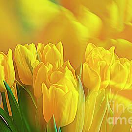 Yellow Tulips by Veikko Suikkanen