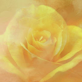 Yellow, Yellow Rose by Terry Davis