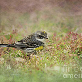 Yellow-Rumped Warbler by Michelle Tinger