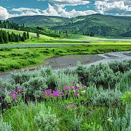 Yellowstone's Lamar Valley by Marcy Wielfaert