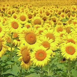 You Are My Sunshine by Rodney Campbell