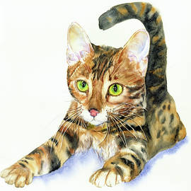Young Bengal by Vicky Lilla