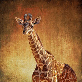 Young Giraffe by Judy Vincent