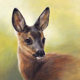 Young roe deer by Marjolein Kruijt
