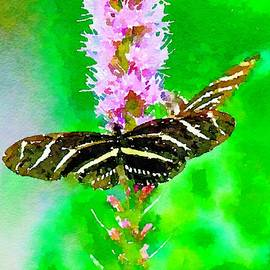 Zebra Longwing Butterfly by Susan Rydberg