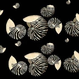 Zebra Pattern Nautilus Shells7 by Joan Stratton
