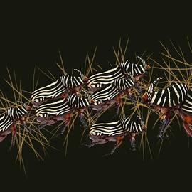 Zebra Pattern Rhinoceros Beetle 4 by Joan Stratton