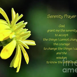 Zinnia Serenity Prayer by Debby Pueschel