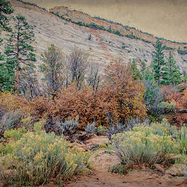 Zions Garden by Jim Cook