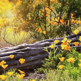 A Spring Morning In The Sonoran by Saija Lehtonen