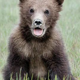 Alaska Brown Bear Cub by Linda D Lester