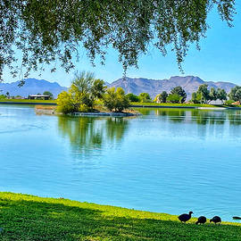 Another Morning at the Park by Barbara Zahno