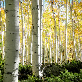Aspen Tranquility by Donna Kennedy