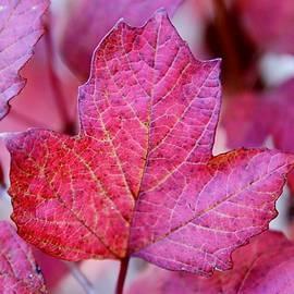 Autumn colour by Joe Vella