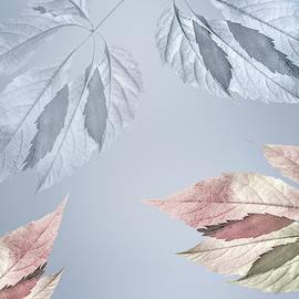 Autumn dance by larisa Fedotova