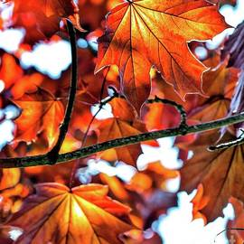 Autumn Leaves by Beautiful Oregon