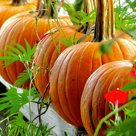 Autumn Still Life by Arlane Crump