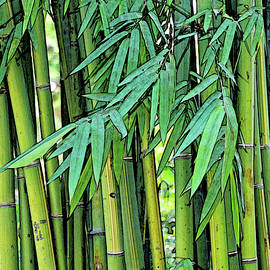 Bamboo Shoots by Maria Keady