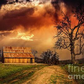 Barn And Oak Tree by Mitch Shindelbower