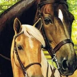 Beautiful horses by Magda Santiago