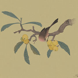 Bird in Loquat Tree by Spadecaller