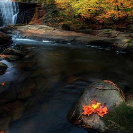 Blackberry River by Bill Wakeley
