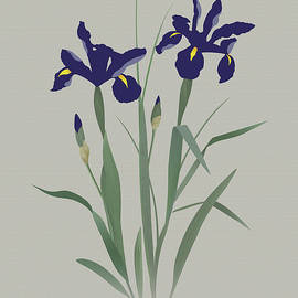 Blue Irises by Spadecaller