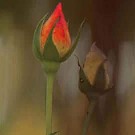 Blush by Elaine Teague