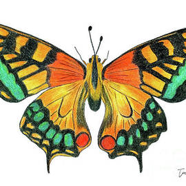 Bold Butterfly by Tina LeCour