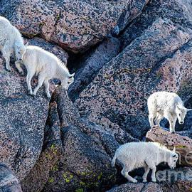 Born To Climb by Jennifer Jenson