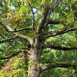 Branching Out by Kerri Farley
