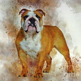 Bulldog Art by Ian Mitchell