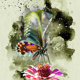 Butterfly by Anthony Ellis
