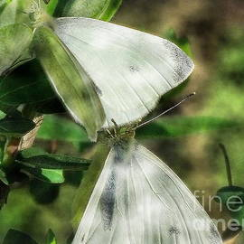 Butterfly Kisses by Tami Quigley