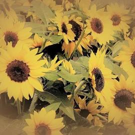 Captured Sunshine by Angela Davies