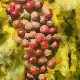 Cardinal grapes by Dragica Micki Fortuna