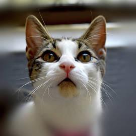 Cat named Furby by Nicholas Christiansen