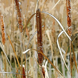Cattails in the Fall by Rob Huntley