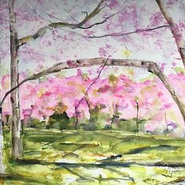 Cherry Blossoms by Nancy Rabe