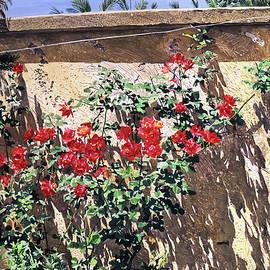 Climbing Roses by David Lloyd Glover