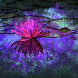 Closeup blooming water lily or lotus flower, with reflecting on the water. Beautiful water plant. by Akos Horvath Decor
