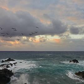 Color in Maui