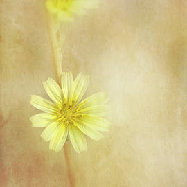 Delicate Yellow Wildflower by Terry Davis