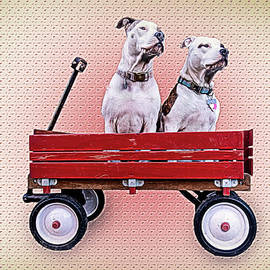 Dogs in Wagon by Cindy Shebley