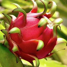Dragon Fruit by Heidi Fickinger