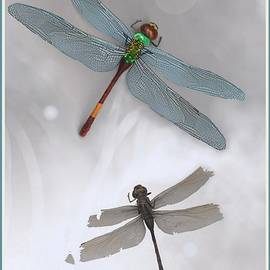 Dragonfly by Hartmut Jager