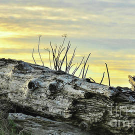 Driftwood - Cape Meares - Oregon by Artistic Oregon Photo