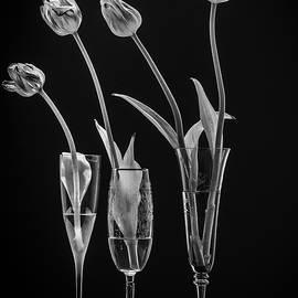 Ensemble by Maggie Terlecki